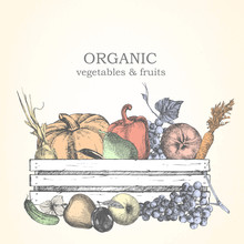 Hand-drawn Illustration Of Veg...