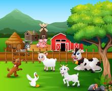 Farm Scenes With Different Animals In The Farmyard