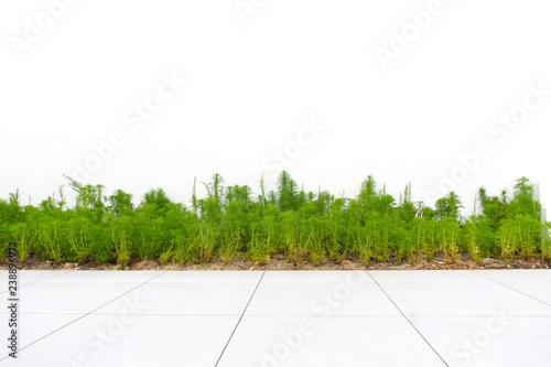 Foto auf Leinwand Weiß Plants, shrubs, or small trees in garden park isolated on white background.