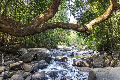 Canvas Prints Forest river Dudhsagar Waterfall, Goa, India.
