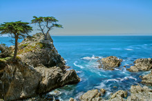 The Lone Cypress At 17 Miles Drive At Highway 1 In California