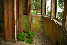 Ancient, Abandoned Wooden Hous...