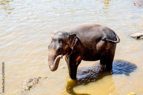 Fotografía  The herd of elephants