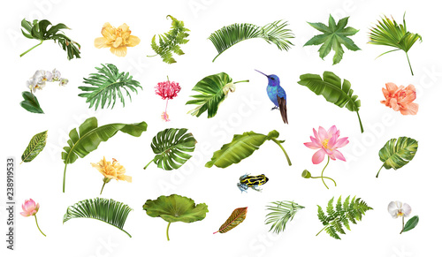 Tropical realistic plants animals and flowers set