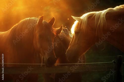 Photo  Lusitano herd