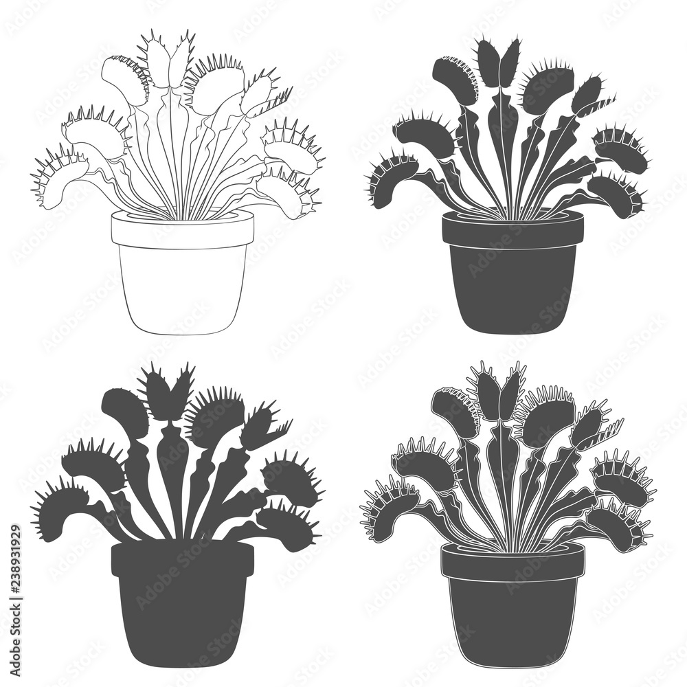 Fototapeta Set of black and white images of venus flytrap. Isolated vector objects on white background.