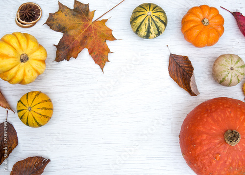 Fotografie, Obraz  A flat lay image of various pumpkins, squash and gourds surrounded by autumn leaves on a white background with copy space