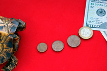 Turtle On A Red Background. The Road From Euro Coins To American Paper Notes. Concept Of Slow Progress Of Financial Flows. Fast Or Long Journey. How To Make Money Fast.