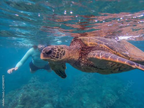 Foto op Canvas Schildpad Green Sea Turtle Close Up Profile Underwater