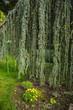 Green plants in Aivazovsky Park in Crimea, Russia