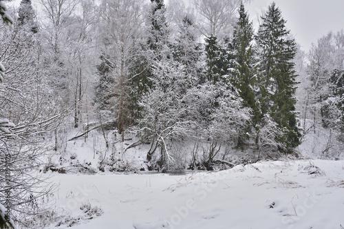 Foto op Aluminium Purper trees in snow