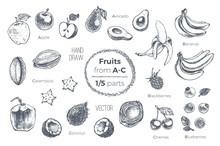 Fruits Hand Drawn Sketch Icons Set. Organic Food