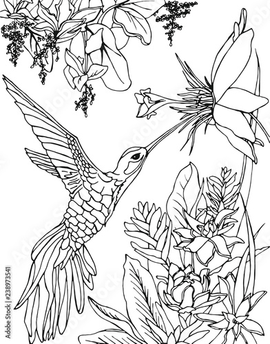Hummingbird flying under the flowers and drinking nectar Poster Mural XXL