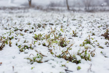 Agricultural Fields Covered With Fine Snow. Spring Fields.