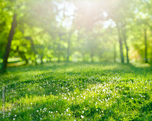 Photo sur Aluminium Jardin grass background