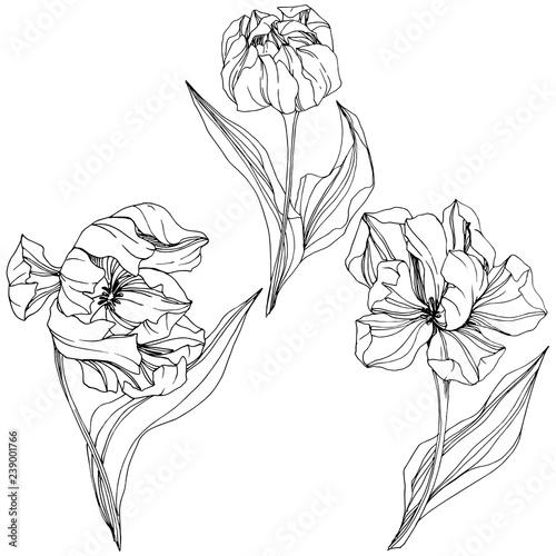 Fotobehang Bloemen zwart wit Vector Tulip Black and white engraved ink art. Floral botanical flower. Isolated tulip illustration element.