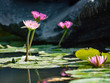 water lily/ pond/ park