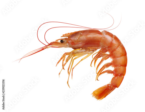 Red tiger shrimp on white background