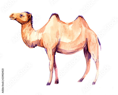 Carta da parati Camel. Watercolor illustration