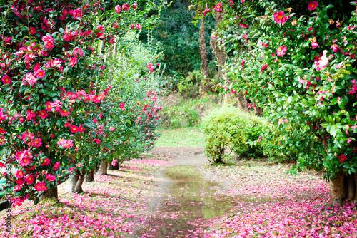 Fotografie, Tablou 花と水溜りと小道