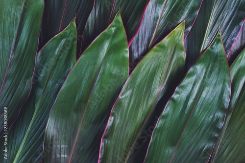Photo sur Toile Les Textures Dark green leaf texture pattern background, natural texture concept