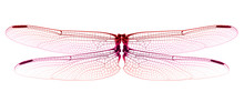 Red Dragonfly Wings Isolated O...