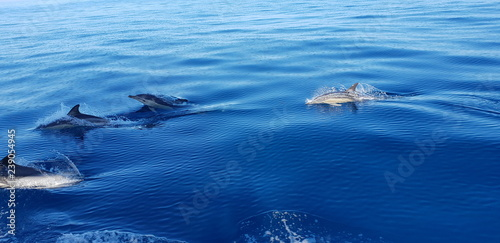 Foto op Aluminium Dolfijn Dolphins in the Algarve, Portugal
