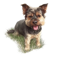 Cute Puppy On The Grass. Dog Isolated On White Background. Yorkshire Terrier Is A Mini Dog. Realistic Hand Drawn Illustration Of Pet. Animal Collection. Design Template. Good For Print T Shirt, Card