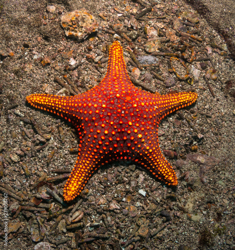 Starfish in the Galapagos.