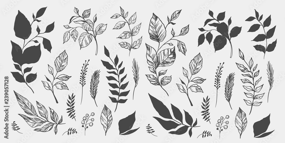 Fototapety, obrazy: Set of leaves. Hand drawn decorative elements. Vector illustration