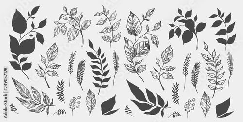 Obraz Set of leaves. Hand drawn decorative elements. Vector illustration - fototapety do salonu