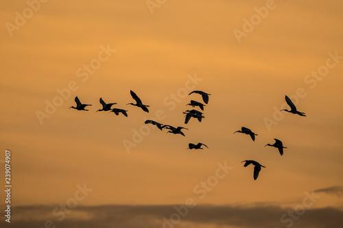 Fotografie, Obraz  birds