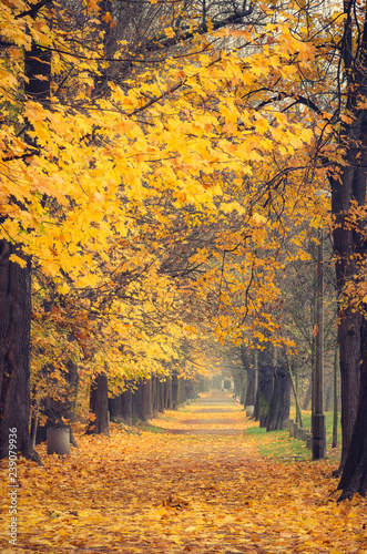 Autumn colorful tree alley in the park, Krakow, Poland