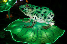 Green Frog Paper Sculpture Shining In The Dark At A Asian Lantern Festival.