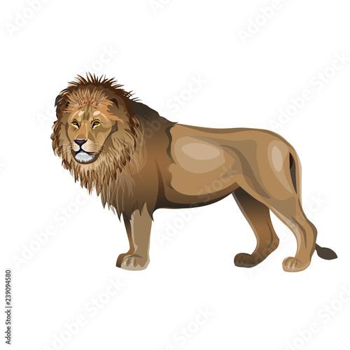 In de dag Kinderkamer African lion vector