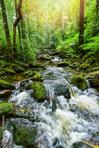 plant tropical stream waterfall forest / nature green plant tree rainforest tropical jungle small waterfall - 239101990