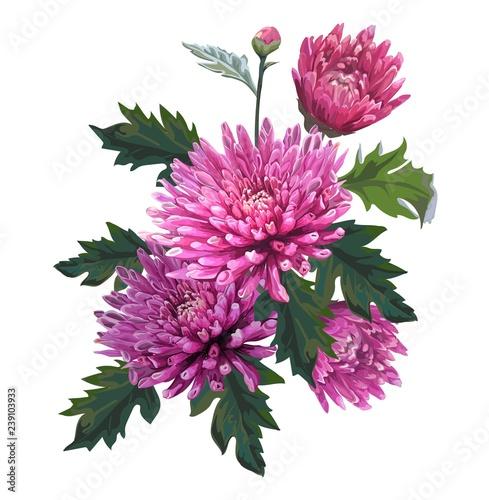 Chrysanthemum flower vector illustration Wallpaper Mural
