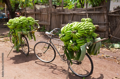 Pile of green African bananas stacking on bicycle at fresh market in Mto wa Mbu village, Arusha Region, Tanzania