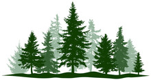 Green Forest Evergreen Pine, Tree Isolated. Park Christmas Tree. Individual, Separate Objects. Vector Illustration