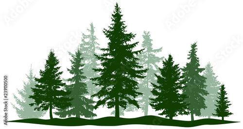 Zielona lasowa wiecznozielona sosna, drzewo odizolowywający. Choinka parkowa. Pojedyncze, osobne obiekty. Ilustracji wektorowych