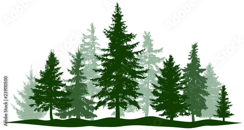 Green forest evergreen pine, tree isolated Tapéta, Fotótapéta