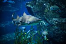 Shark Underwater Sea Large Rag...