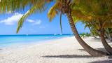 Fototapeta Landscape - Caribbean beach paradise dominican republic island Saona with palm tree