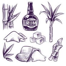 Hand Drawn Sugar Cane. Sugarcane Sweet Leaves, Sugar Plant Stalks, Farm Harvest, Rum Glass And Bottle. Vintage Engraving