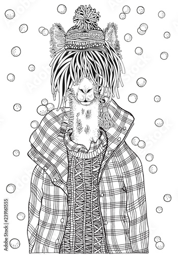 Winter llama in a checkered jacket. Adult Coloring book page. Hand ...