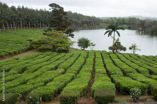 Plakat piękny park złożony z krzewów wykutych na skraju laguny na Mauritiusie
