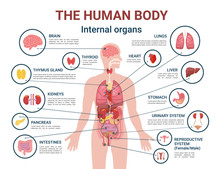Human Body Internal Organs And Parts Info Poster