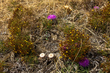 Several White And Violet  Flowers Of Strange Plants That Grow Up In Dry Place.