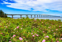View Of Confederation Bridge With Flowers In Front