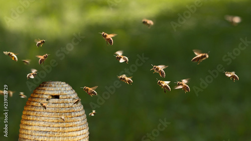 Spoed Foto op Canvas Bee Honigbienen am Bienenkorb